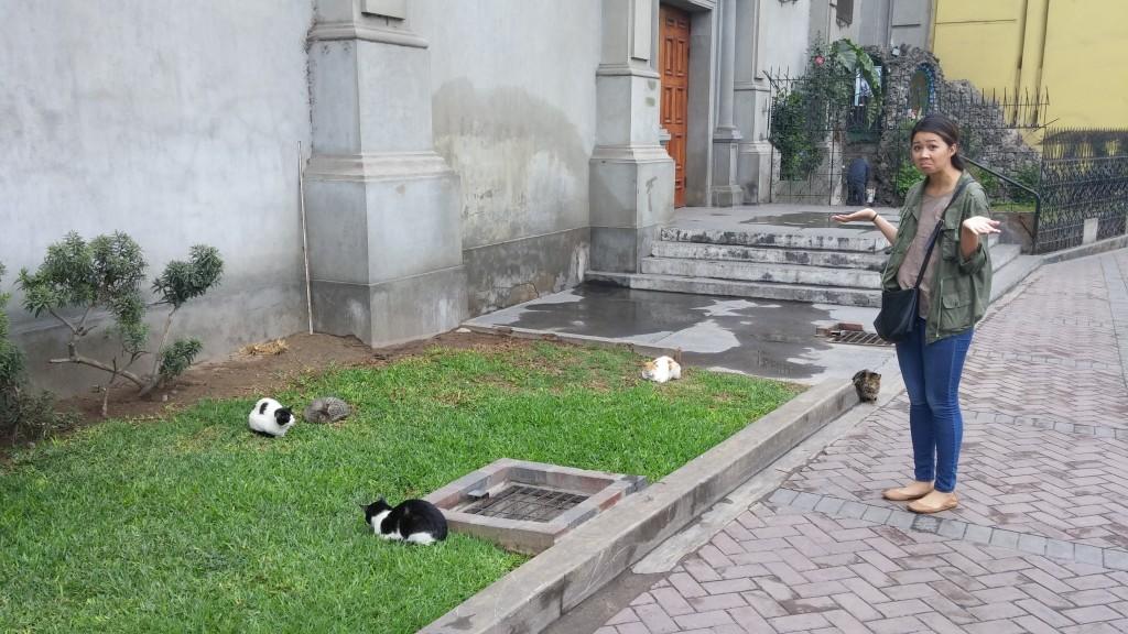 Parque Kennedy - Miraflores